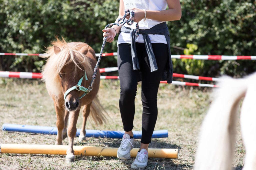 pferdecoaching - einzeln