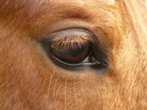 pferdecoaching - bayern