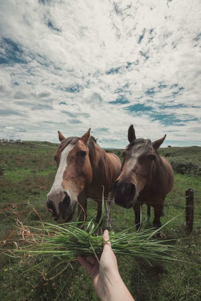 pferdesprache - persoenlichkeitsentwicklung mit pferden