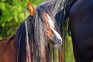 sprache des schweifes in der pferdesprache
