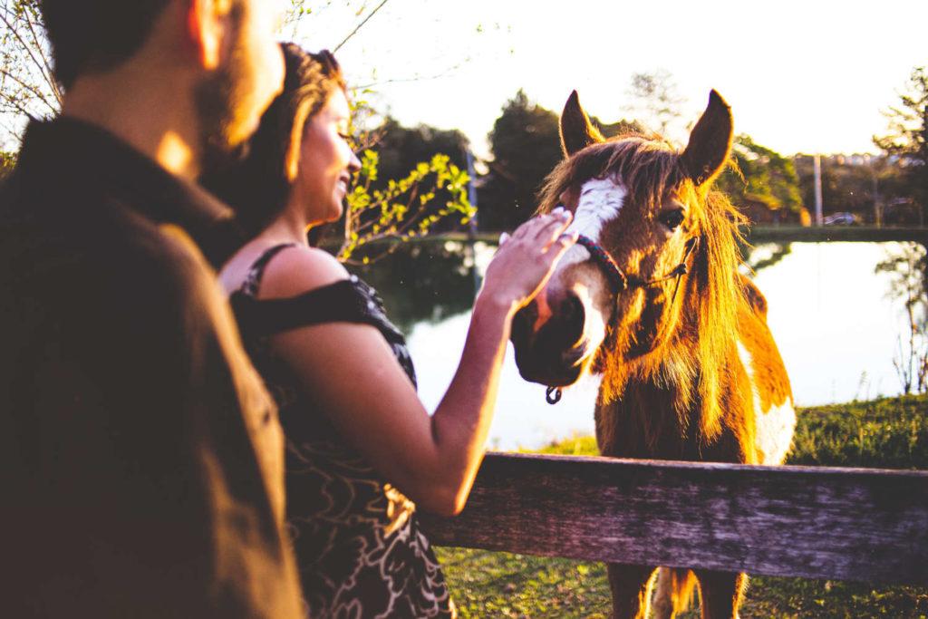 mit pferden gluecklich sein