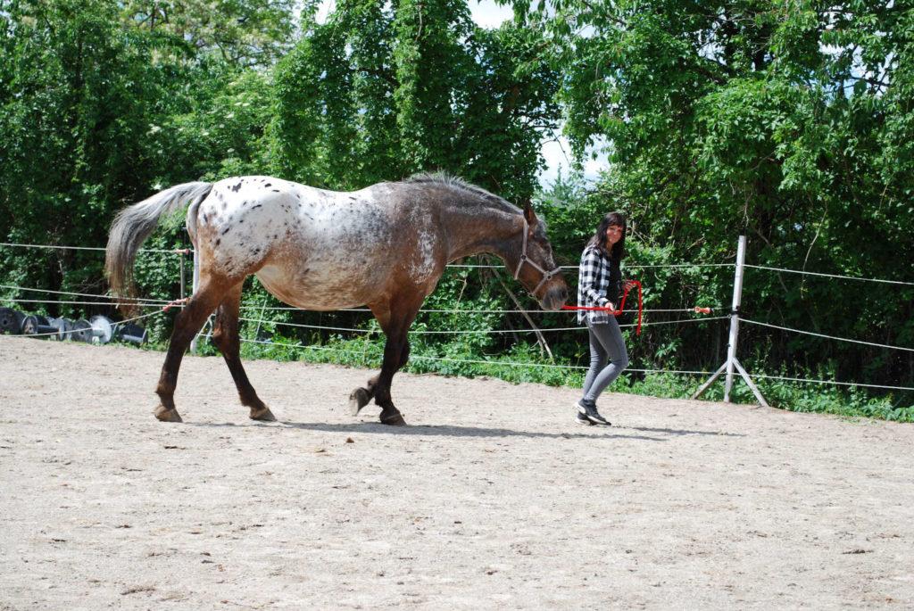 pferdecoachiing - erwachsene