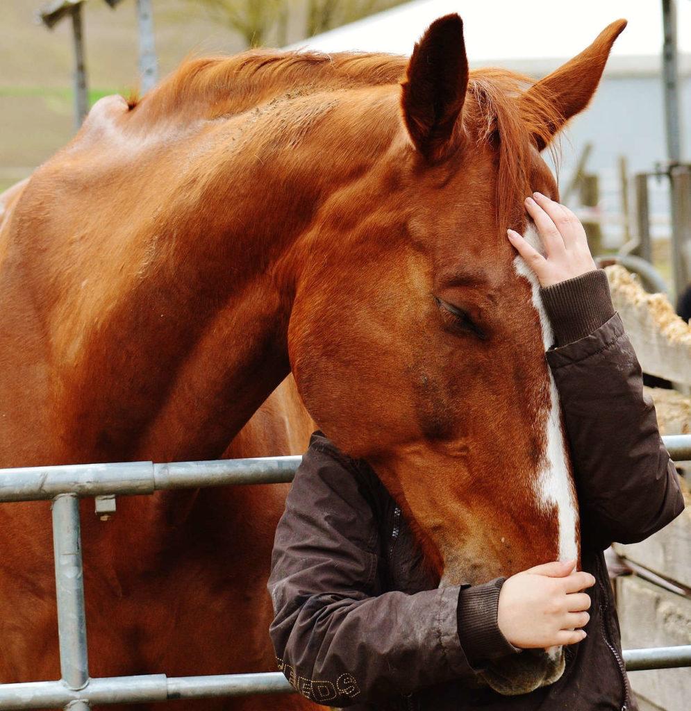 pferdegestüttes Coaching - Stressbewältigung