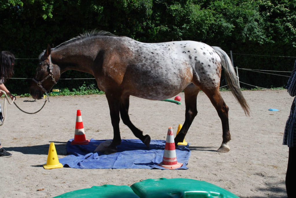 führübung - pferdecoaching
