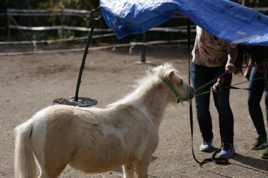 teamcoaching mit pferd