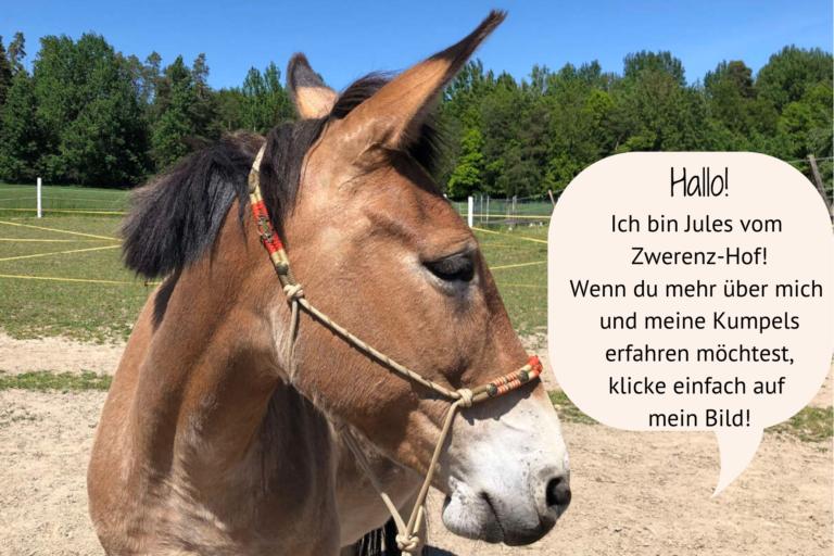 maultier - pferdecoaching