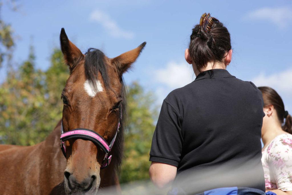 Persoenlichkeitsentwicklung mit Pferden
