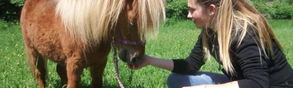 horse assisted coaching kinder und jugendliche